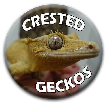 crested geckos button 2.png