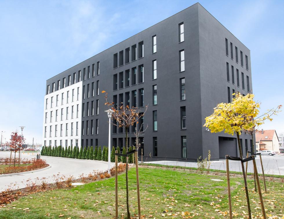 Zielony Szeląg, Poznań