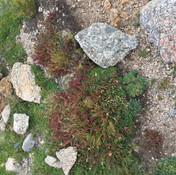 moss and grass