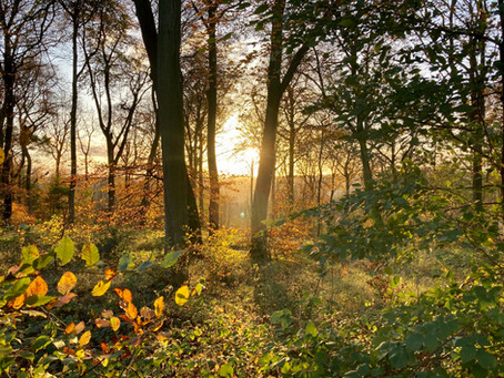 How connecting with nature can improve your mental health & wellbeing