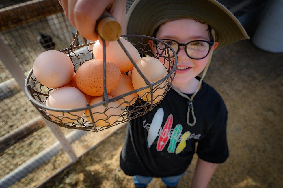 noble_DSC5850-Eggs.jpg