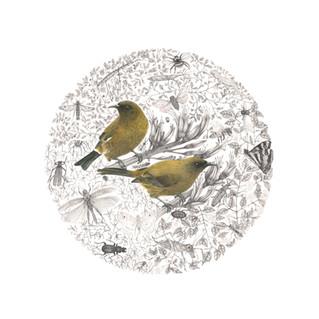 Bellbird Mandala