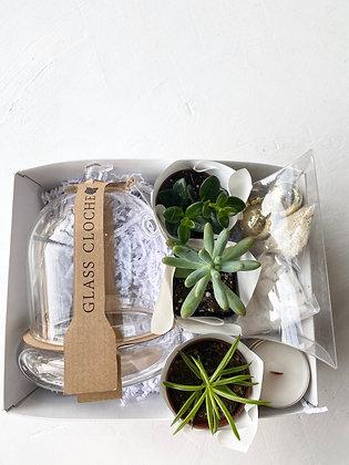 DIY Holiday Succulent Terrarium Gift Box