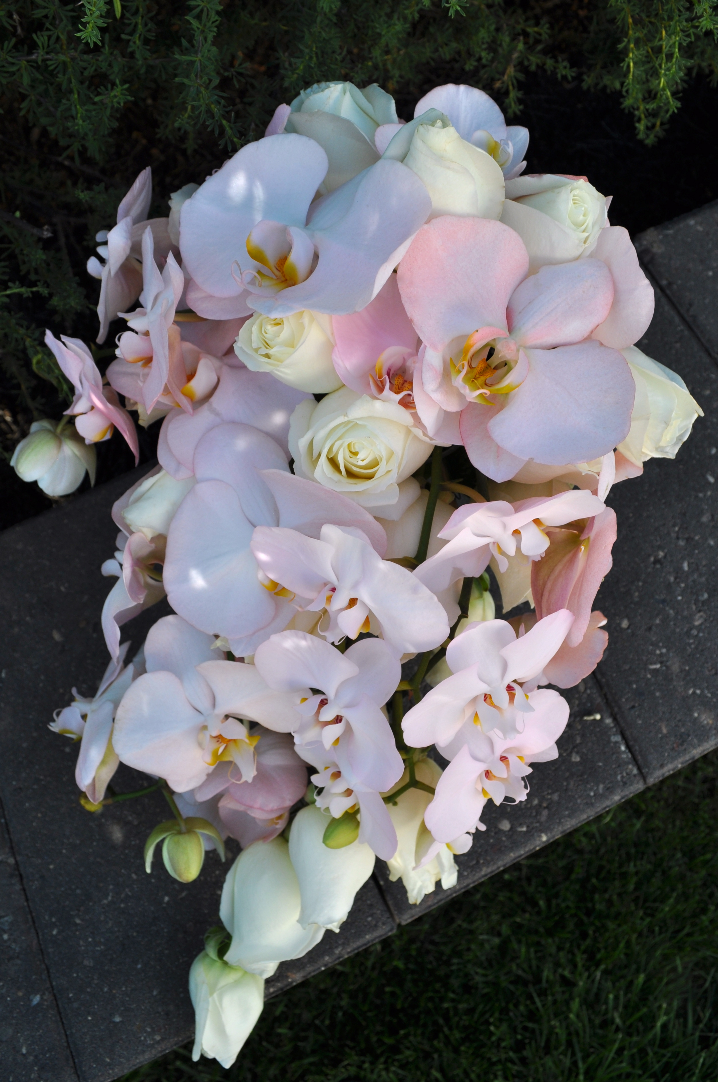 Blushing Orchid Cascade