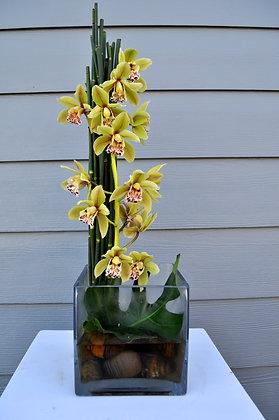 Green Cymbidium Orchid Cube