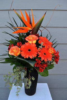 Vivid Orange & Black