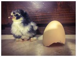 Eggy Pop