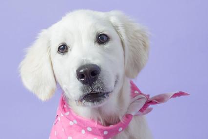 Main Line Pet Photography