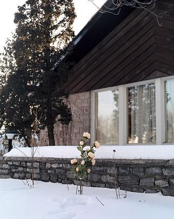winterflowersblur.jpg