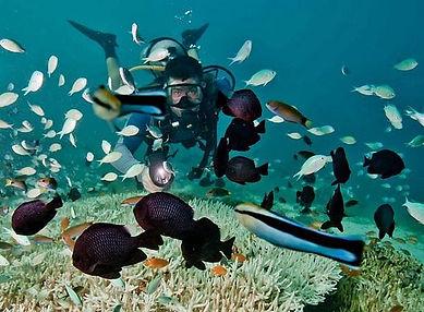 Зимой на Филиппины, где поплавать с акулами, зима на Филиппинах
