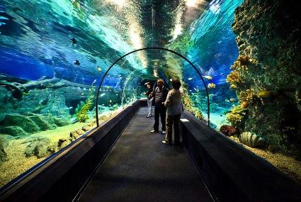 Океанариум Адлера