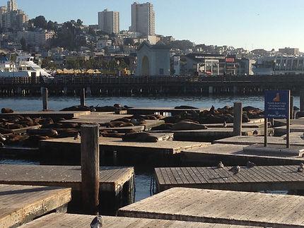Путешествия по Америке. Сан-Франциско. Лежбище морских львов на пирсе.