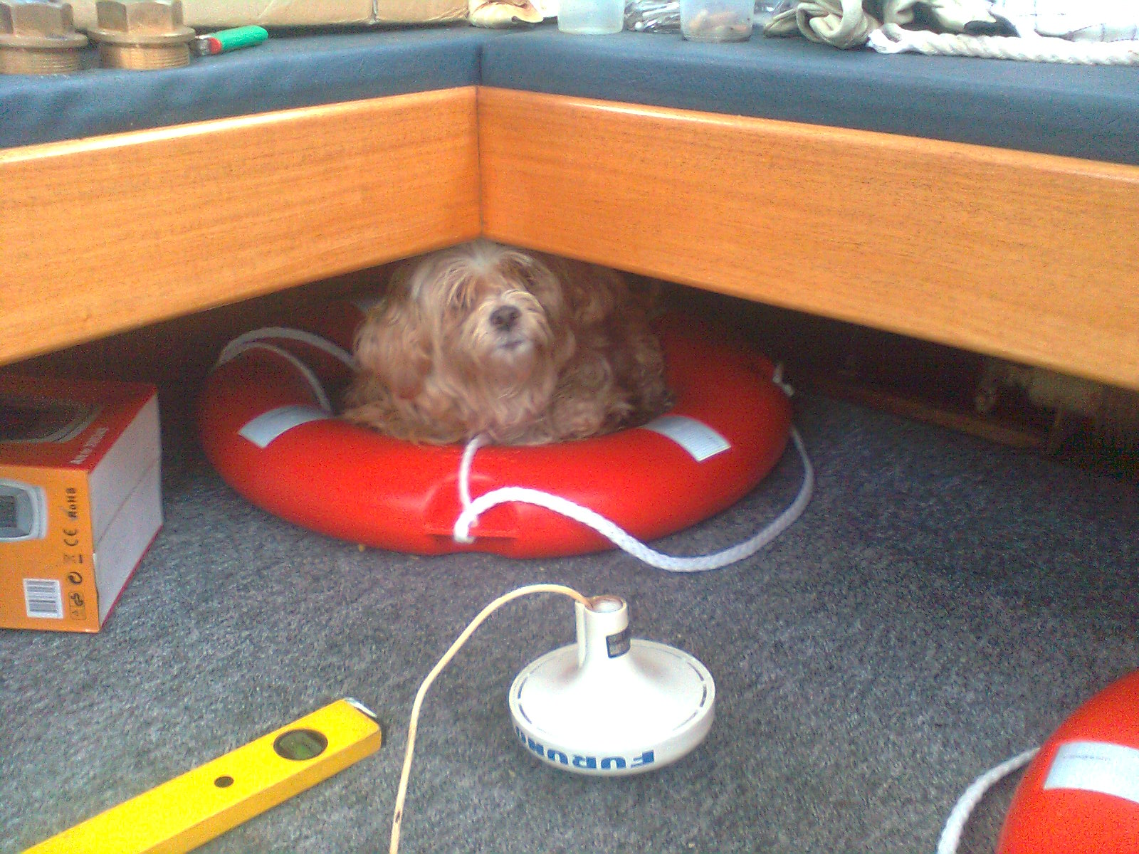 Skibs-hunden Maja