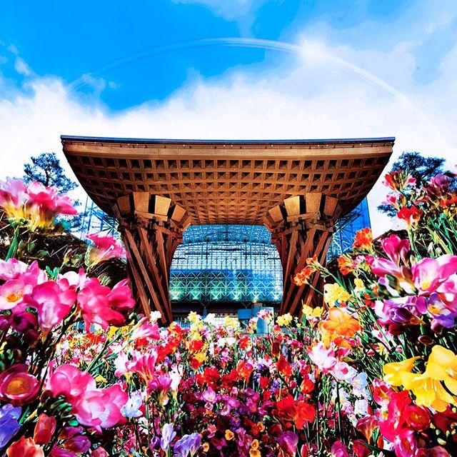 金沢駅✖️フリージア✖️野村天圭衣 _Kanazawa station!!! F