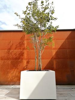 Witte polyester boombak ik binnentuin