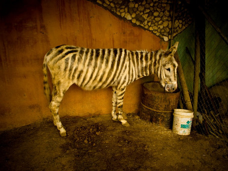Neglected animals evacuated from Gaza zoo