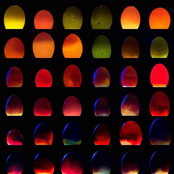 36 eggs.jpg