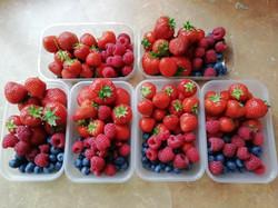 Berry prep - jpg