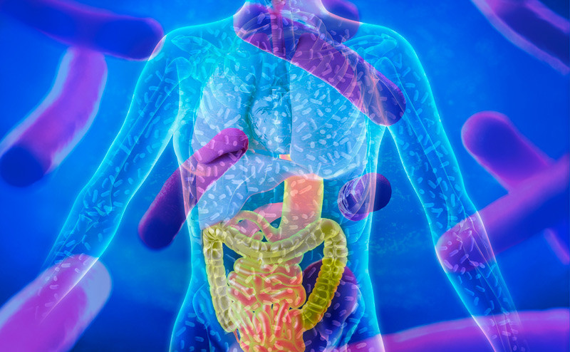 the human microbiome and gastrointestinal tract