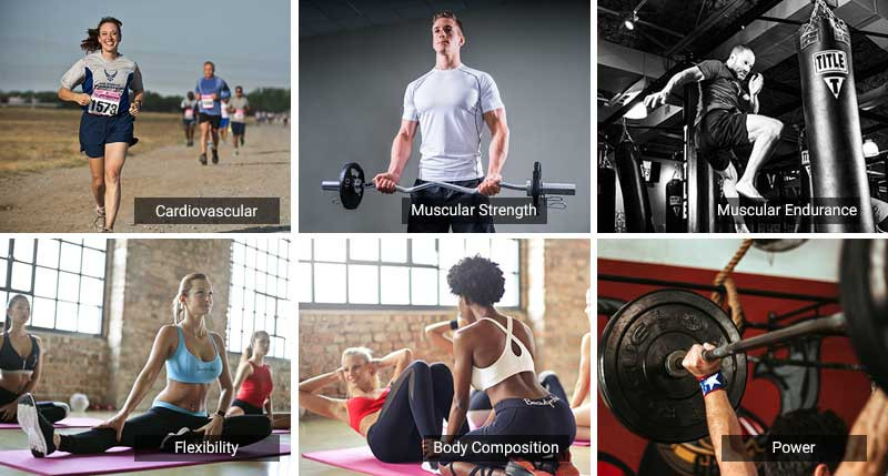 a collage of the components of fitness: cardiovascular, muscular strength, strength, flexibility