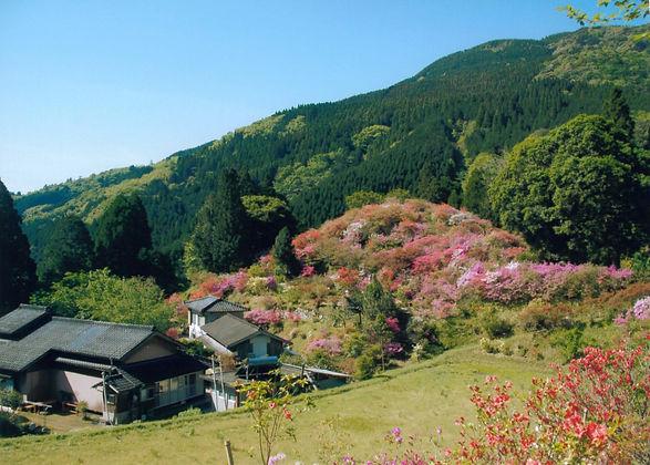山里の初夏(槻木).jpg