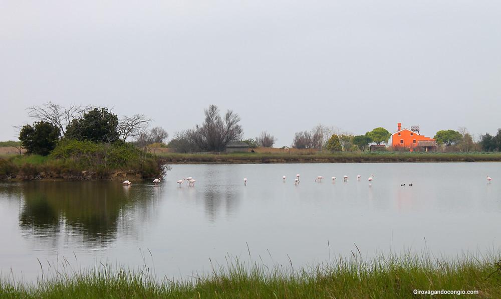 Fenicotteri rosa a Lio Piccolo e i casoni della laguna veneta nord
