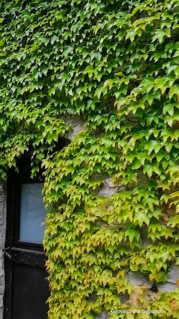 le case ricoperte di edera a Brugnello