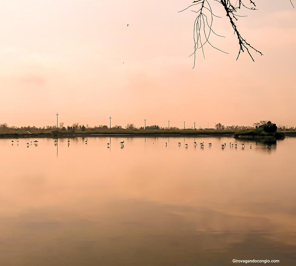 Fenicotteri rosa a Lio Piccolo alla luce del tramonto