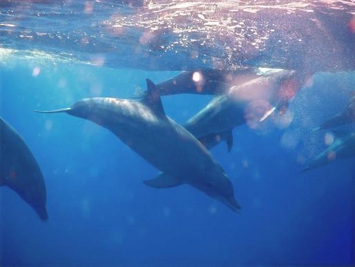 Nuotare con i delfini, l'emozionante esperienza a Zanzibar