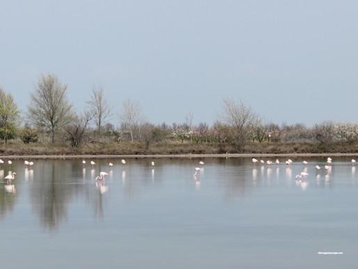 Lio Piccolo, il paesino della laguna veneta abitato da fenicotteri rosa