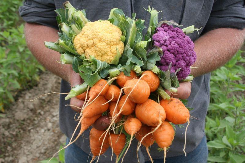 Food veggies.jpg