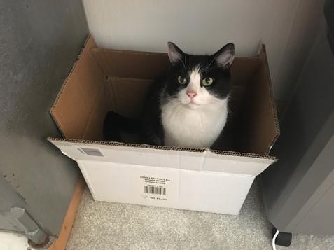 Kato - loves a box.