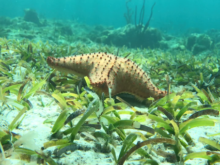 Honeymoon Destination: Turks & Caicos