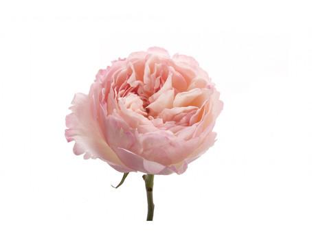 Floral Substitutes