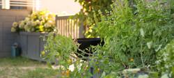 le_domaine_de_mandrin-jardin-©MalikaTur