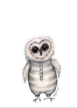 Jarlin owlet