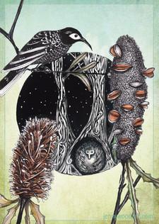 Banksia birds A4 $10
