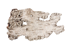 birch bark.png