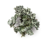 twigs with lichens2.png