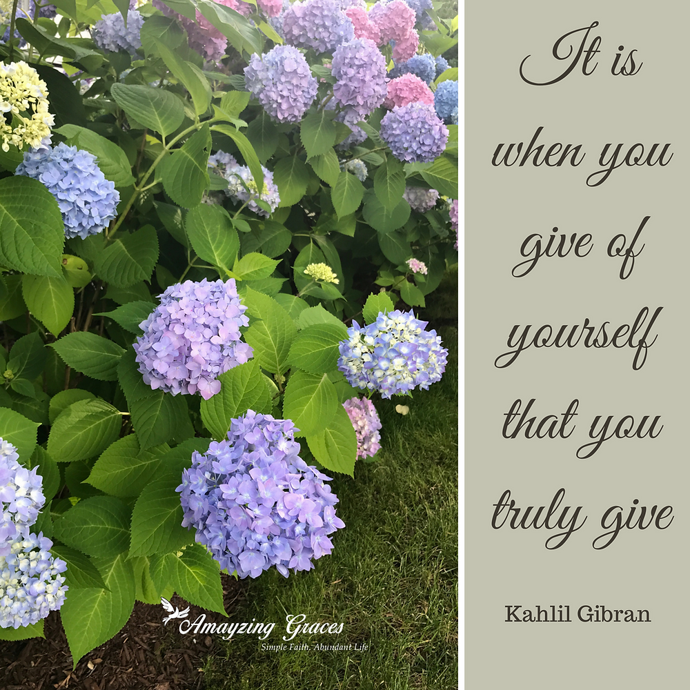 It is when I give of yourself that you truly give, Kahlil Gibran, flowers, Karen May, Amayzing Graces, hydrangea, charity, devotional