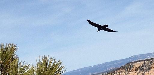 bird-in-flight.jpg