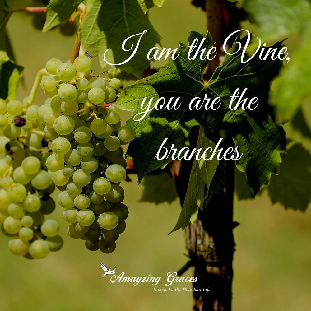 I am the Vine, you are the branches, John 15:5, Karen May, Amayzing Graces