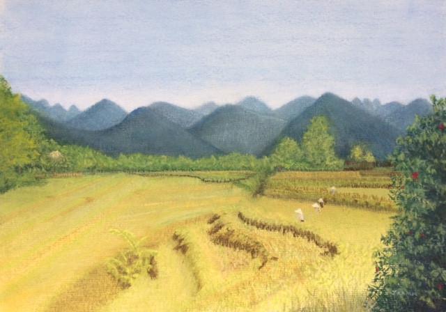 Vietnamese Rice Harvest 2017