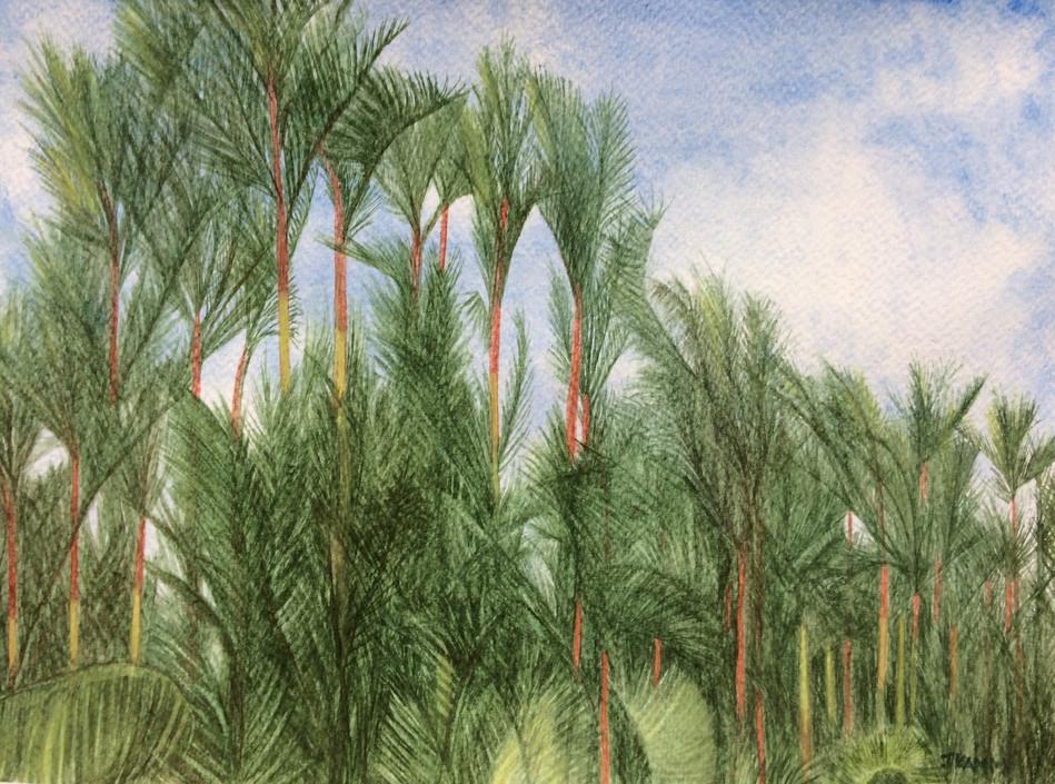 Singapore Lipstick Palms