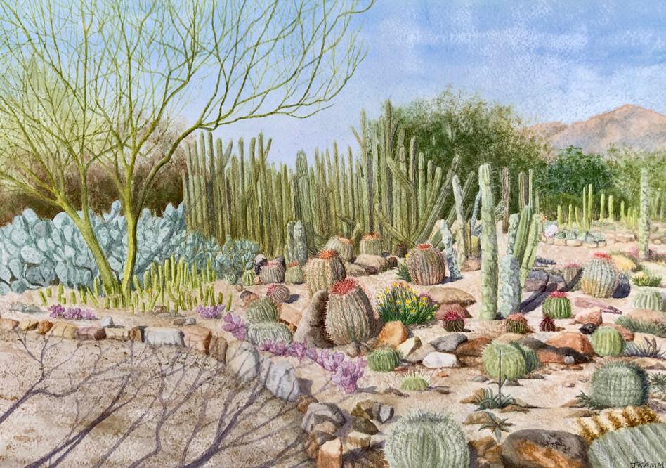 Sonoran Museum Cactus Garden