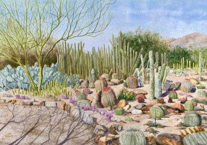 Sonoran Desert Museum Cactus Garden