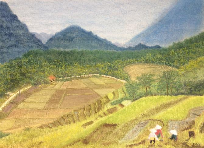 Vietnamese Rice Harvesters