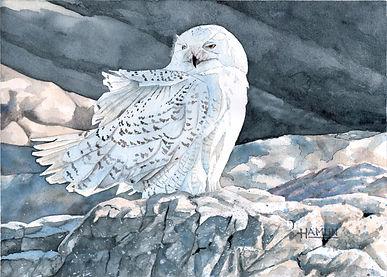 Hamlin-Sachuest Snowy Owl.jpg