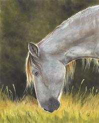 horse backlit WM.jpg