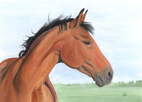 compressed bay horse WM.jpg